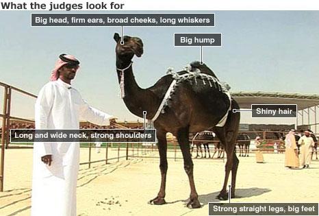camel2 64