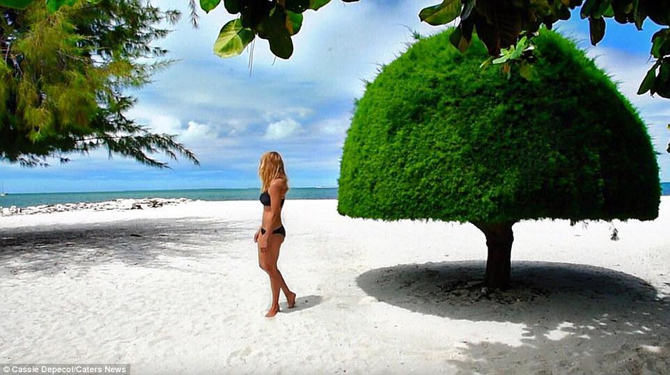 cassie di pantai pulau krismas republik kiribati