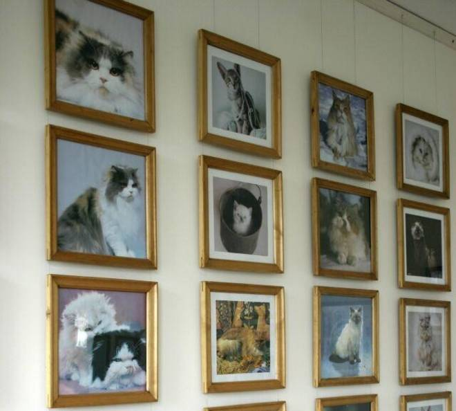 cat museum lithuania