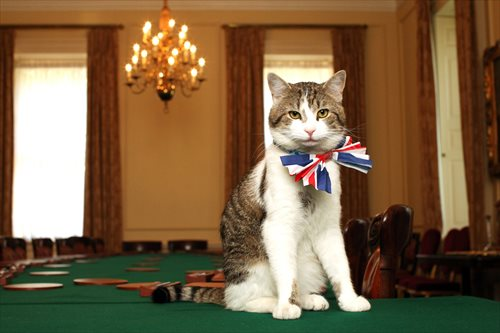 chief mouser kabinet british