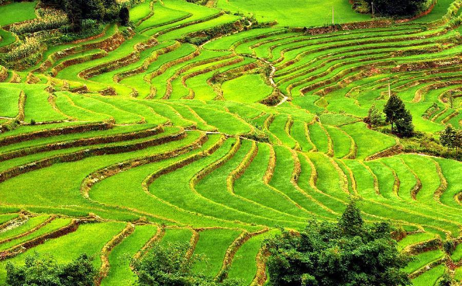 china 10 negara pengeluar beras terbesar di dunia