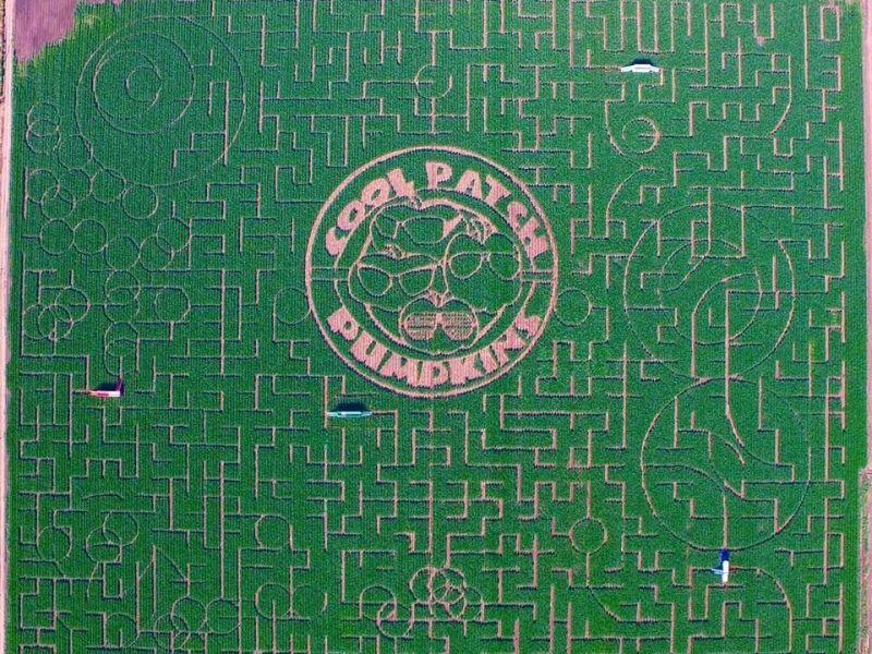 cool patch pumpkins maze
