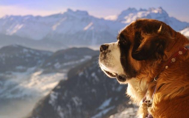cukai anjing switzerland 554