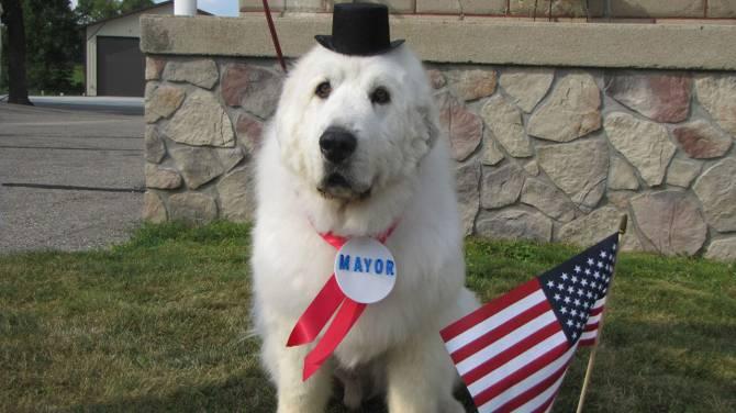 duke datuk bandar anjing
