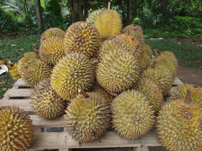 durian raja segala buah