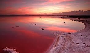 dusty rose lake tasik pink yang misteri di kanada