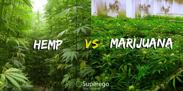 fakta mengenai marijuana vs hemp