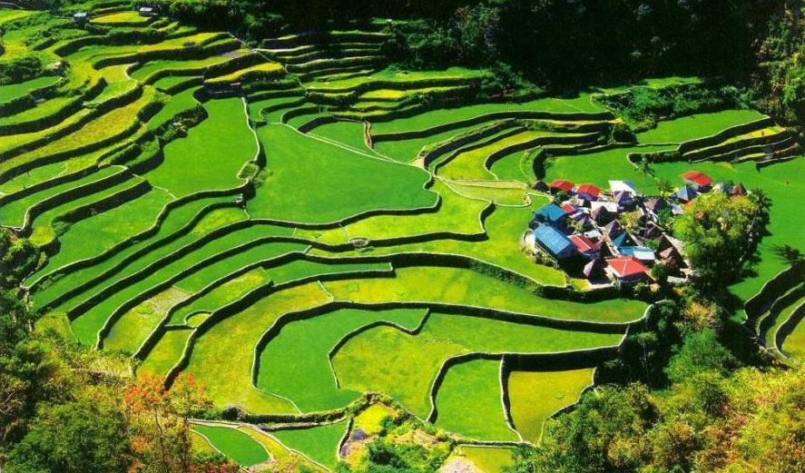 filipina 10 negara pengeluar beras terbesar di dunia