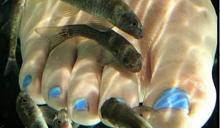 fish spa 529