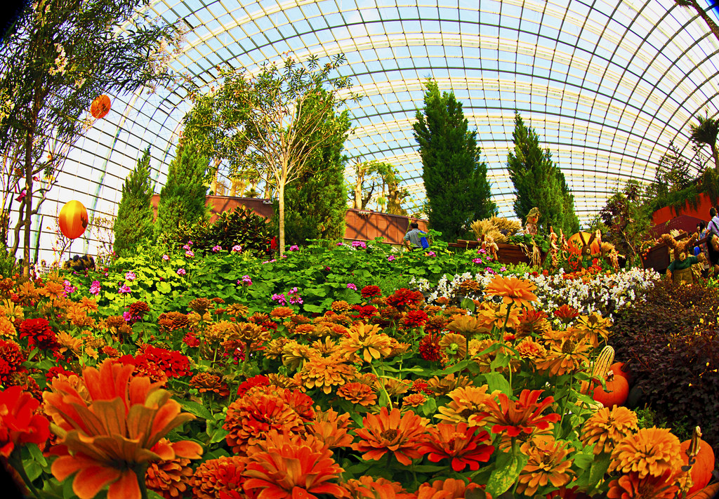 flower dome 75