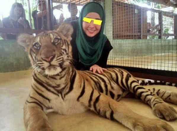gadis dengan harimau memaparkan keberanian yolo