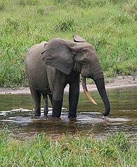 gajah 670