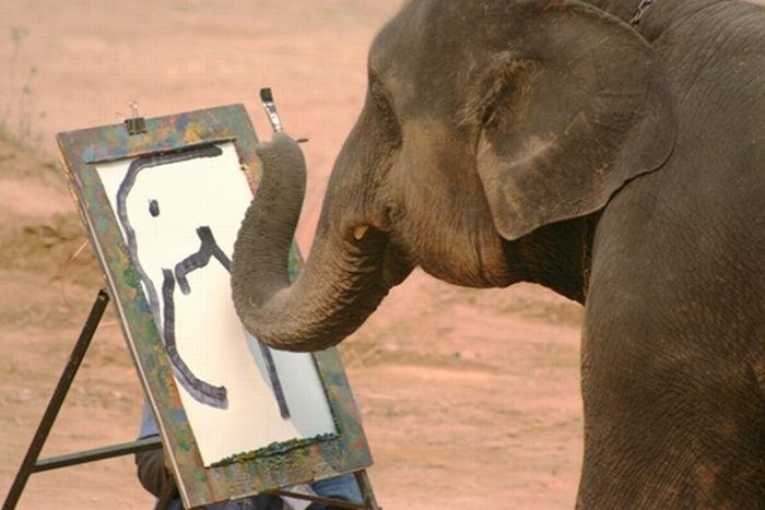 gajah bijak