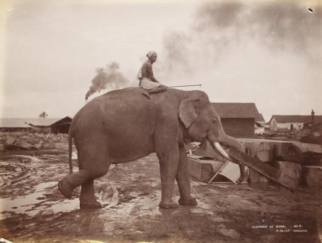 gajah kerja