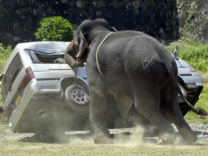 gajah pijak pemandu lori hingga parah bakal dipindahkan ke pusat konservasi