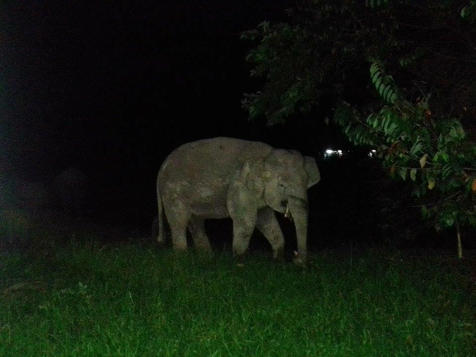 gajah sesat berkeliaran cari makanan di kantin smk telupid sabah 3
