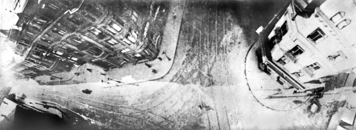 gambar yang diambil burung merpati 266