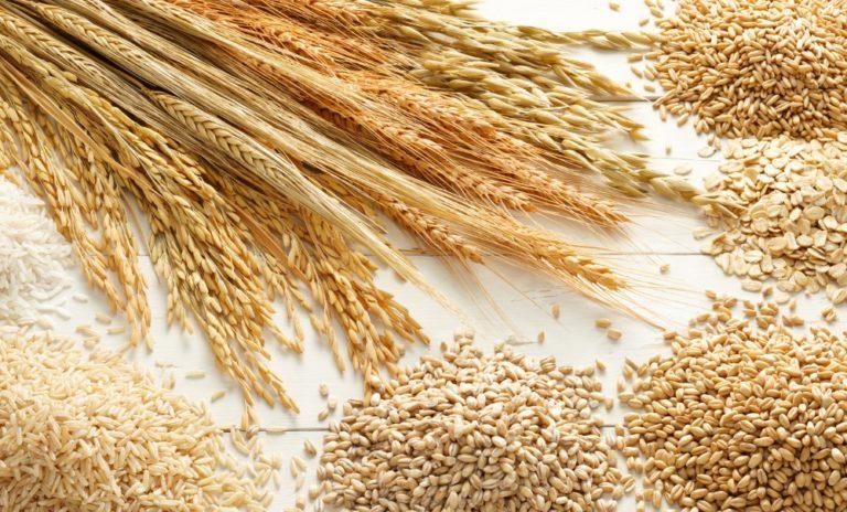 gandum ganti beras sebagai makanan ruji rakyat malaysia