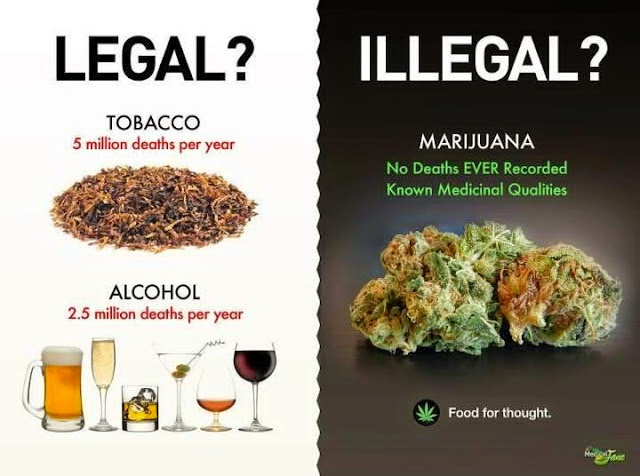 ganja legalisasi malaysia