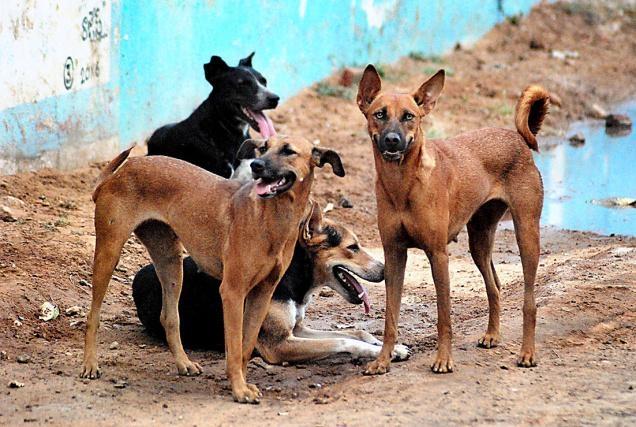 gigitan anjing menyebarkan rabies