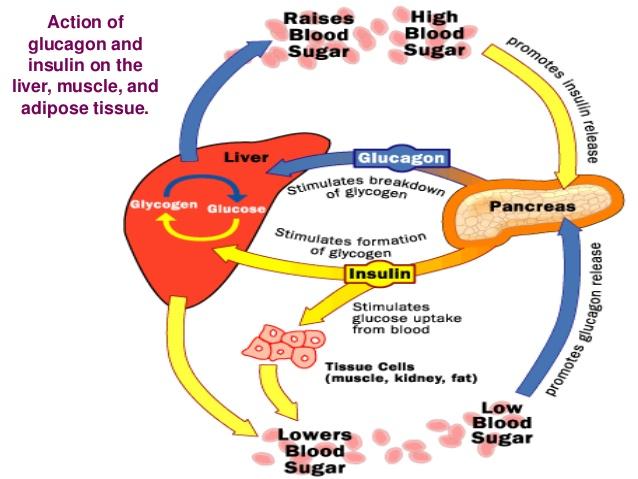 glukosa dalam darah
