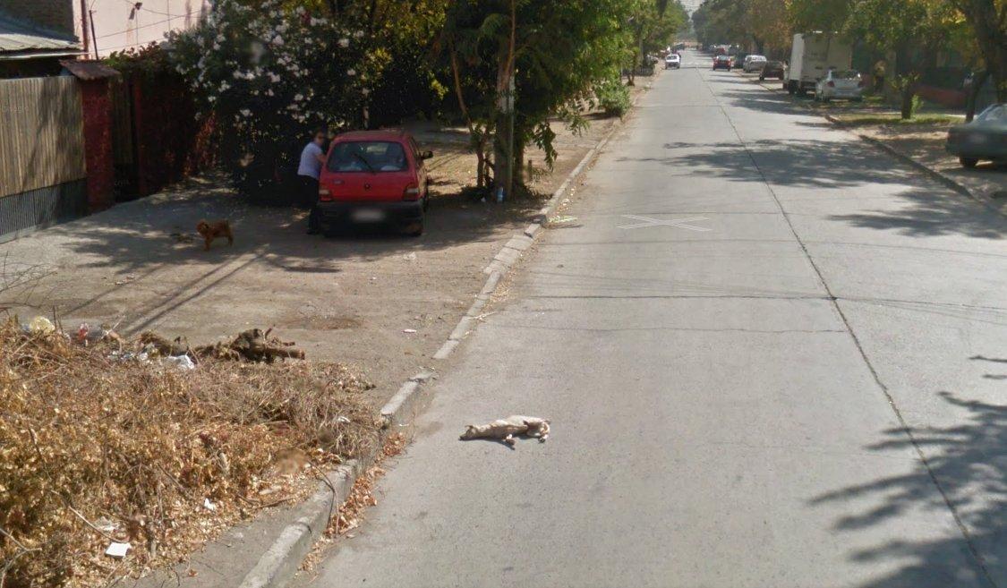 google car langgar mati anjing