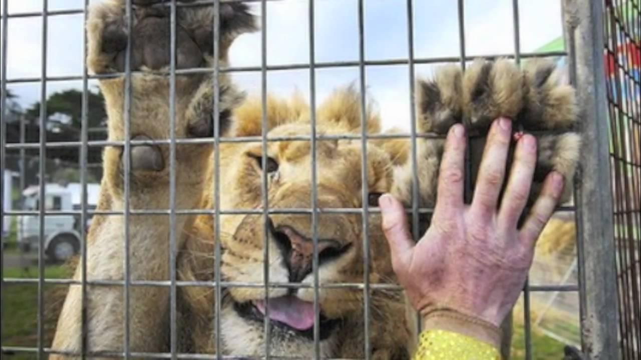 haiwan zoo hidup dalam ketakutan