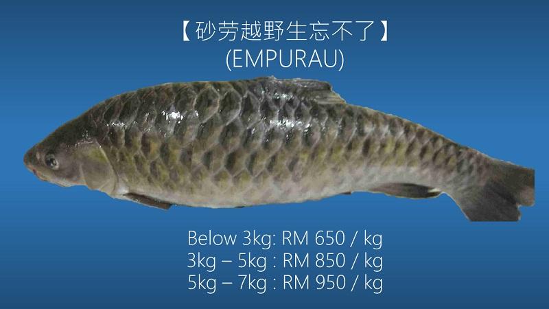 harga ikan empurau paling mahal dalam malaysia