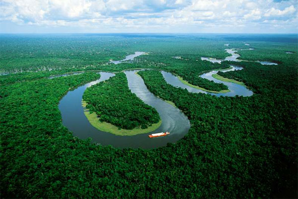 hutan amazon 903