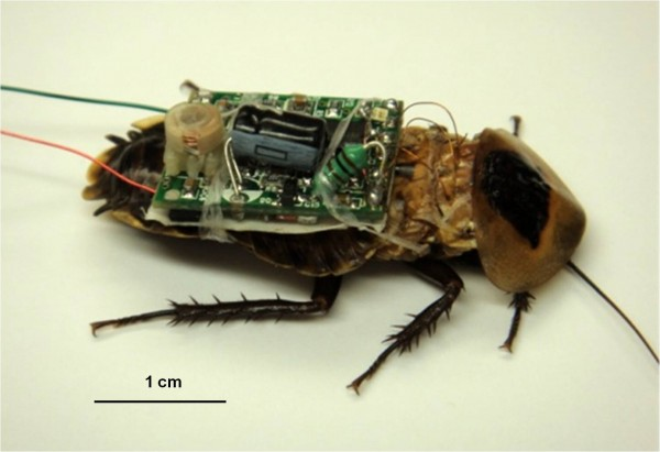 hybrid insect mems