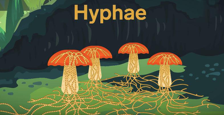 hyphae akar kulat pada roti