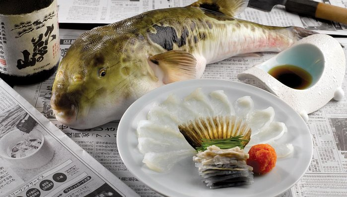 ikan buntal 67