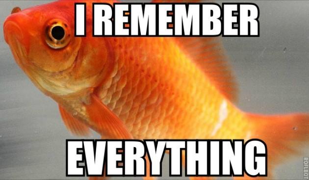 ikan emas pelupa