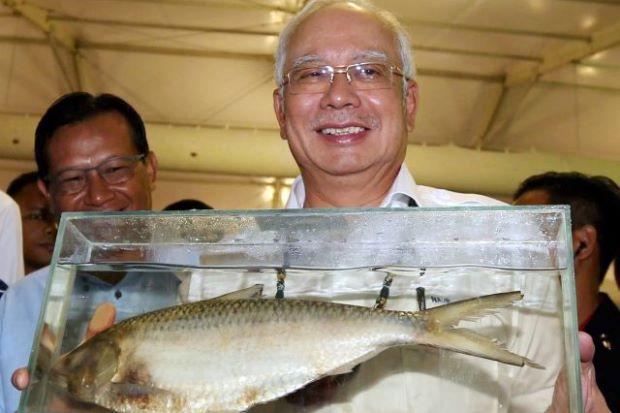 ikan empurau ikan kelah najib razak ikan raja sungai termahal dalam malaysia