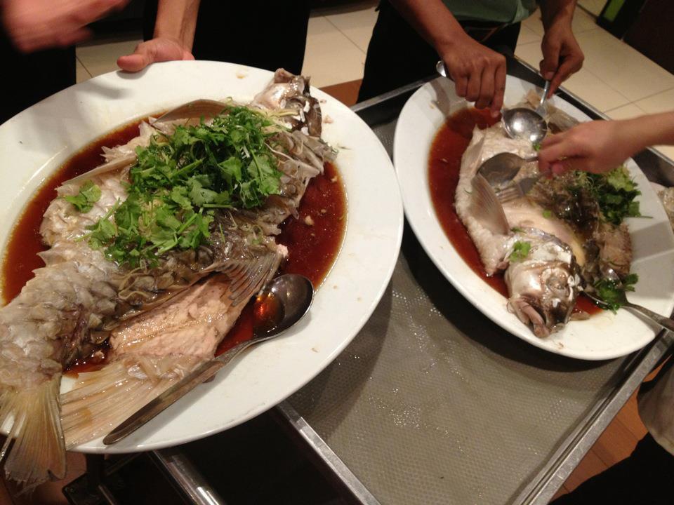 ikan empurau ikan paling mahal dalam malaysia