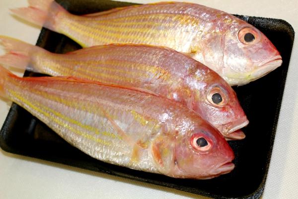 Jenis Ikan Kecil