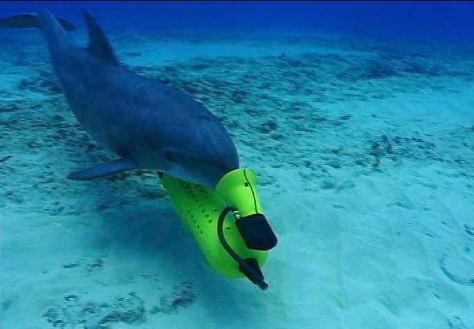 ikan lumba lumba tentera