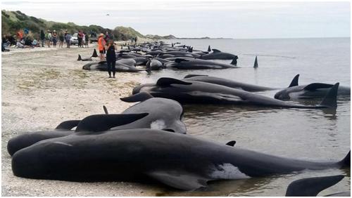 ikan paus tidak mahu pulang ke laut