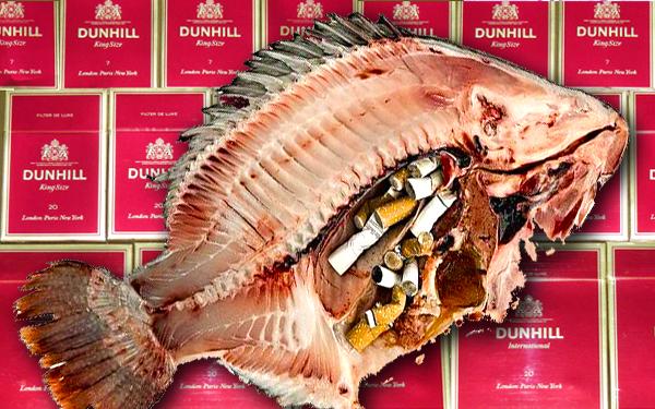 ikan pencemaran rokok dan dunhill 7