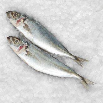 ikan sardin selayang