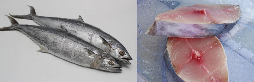 Panduan Mengenali Ikan Yang Selalu Dijual Di Pasar Bahagian 1 Iluminasi
