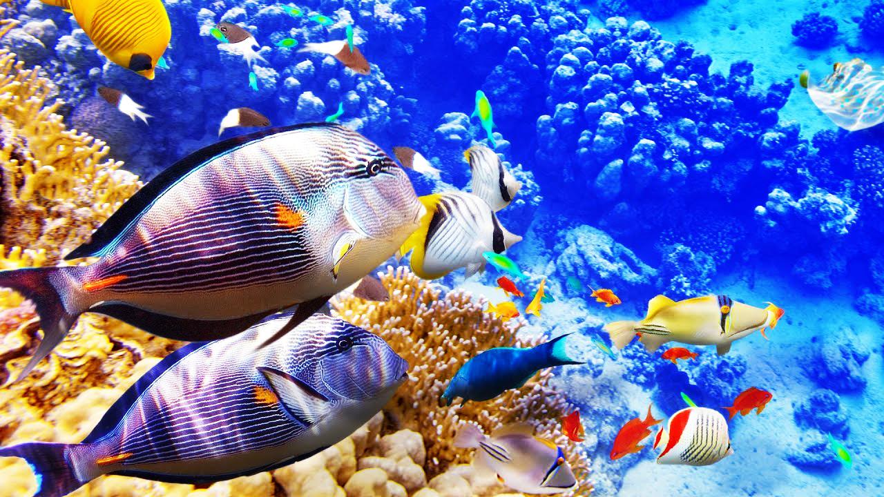 Ikan Cupang Paling Mahal