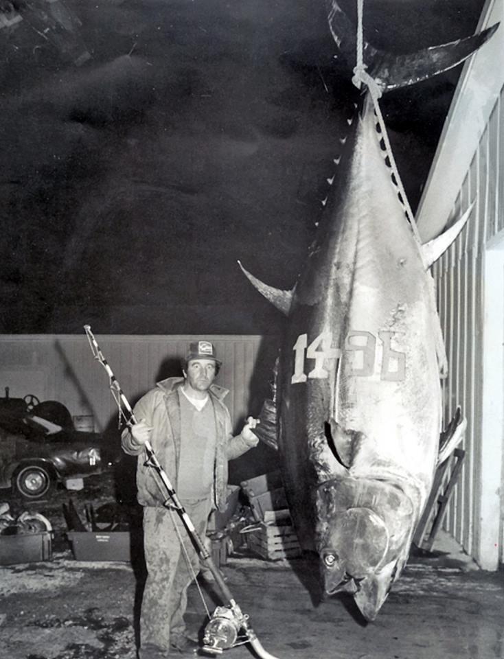 ikan tuna ikan paling besar pernah ditangkap oleh manusia