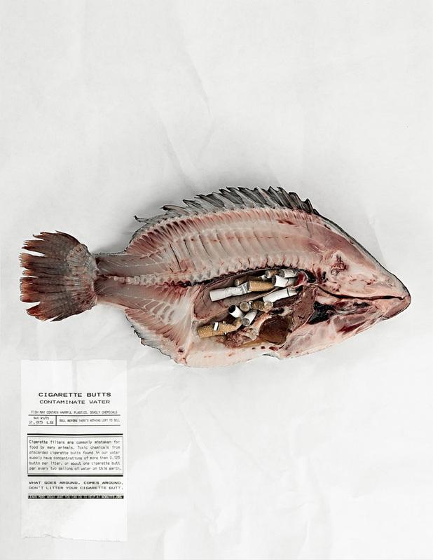 ikan yang mati akibat termakan puntung rokok tercemar