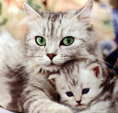 iluminasi anak kucing hidup2