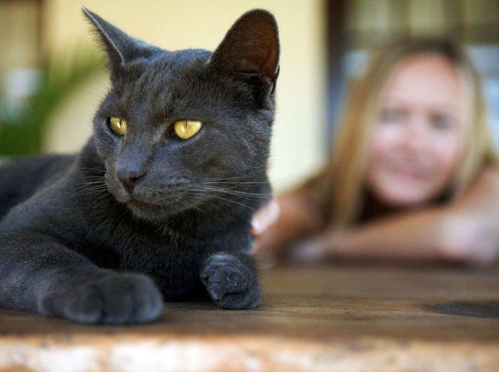 iluminasi kucing comel cat