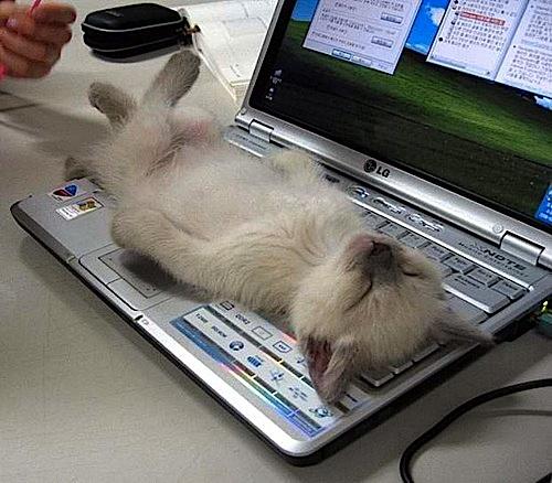 iluminasi kucing comel cat7