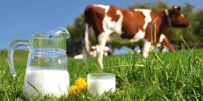 iluminasi susu kesihatan
