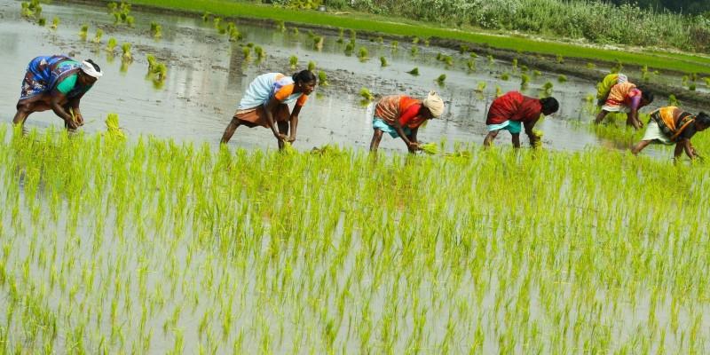 india 10 negara pengeluar beras terbesar di dunia