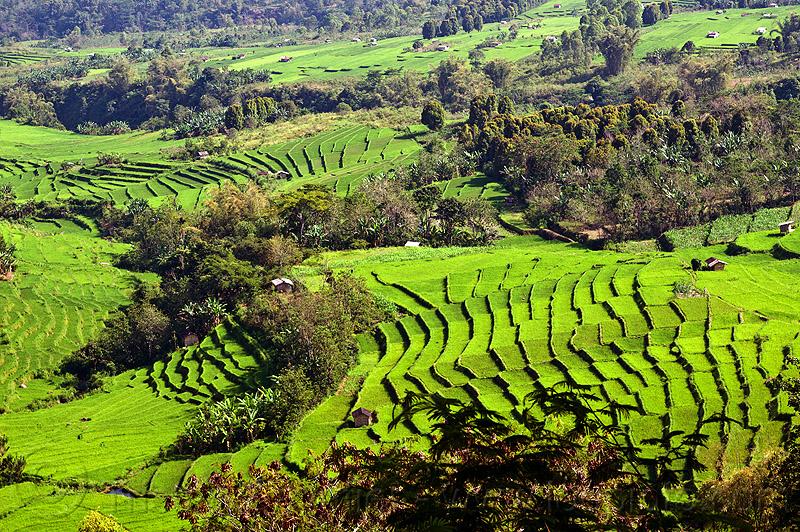 indonesia 10 negara pengeluar beras terbesar di dunia